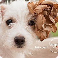 Dachshund/Terrier (Unknown Type, Small) Mix Puppy for adoption in Inland Empire, California - WINTER