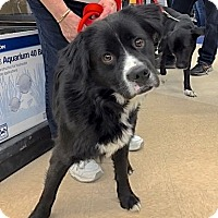 Adopt A Pet :: Smith - Sparta, NJ