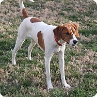 Adopt A Pet :: Lilly - Staunton, VA