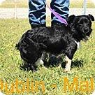 Adopt A Pet :: dublin