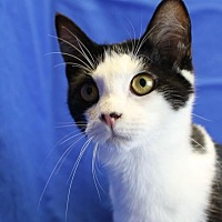 Adopt A Pet :: Rhett - Winston-Salem, NC