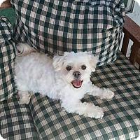 Adopt A Pet :: Chase - Media, PA