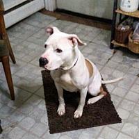 Adopt A Pet :: Nala - Vernon, CT