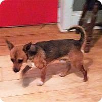 Adopt A Pet :: Drake - Greensboro, GA