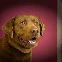 Adopt A Pet :: WILLIE - Frisco, CO