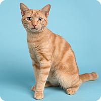 Adopt A Pet :: Butterscotch - Wilmington, DE