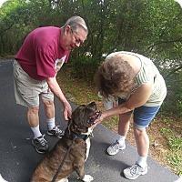 Adopt A Pet :: T-Rex - West Warwick, RI