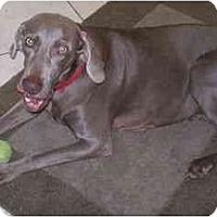 Adopt A Pet :: Roxie  **ADOPTED** - Eustis, FL