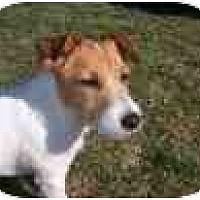 Adopt A Pet :: Yoshi in Denton - Houston, TX
