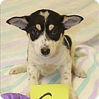 Adopt A Pet :: Jasmine(ADOPTED!) - Chicago, IL
