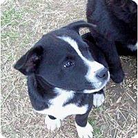 Adopt A Pet :: Oreo - Courtesy post - Glastonbury, CT