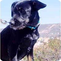 Adopt A Pet :: Maggie Mae - Albuquerque, NM