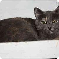 Adopt A Pet :: Silvia - Owasso, OK