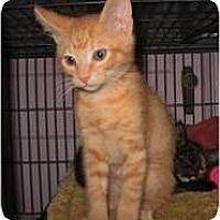 Adopt A Pet :: Sven - Shelton, WA