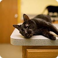 Adopt A Pet :: Blackjack - Valley Falls, KS