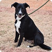 Adopt A Pet :: Buddy - Nyack, NY