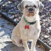 Adopt A Pet :: Grey - San Diego, CA