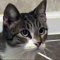 Adopt A Pet :: TG-Erika - Tyler, TX