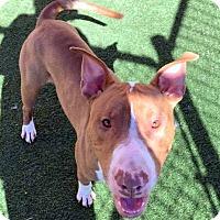 Adopt A Pet :: Jace *Urgent Foster Needed* - O'Fallon, MO