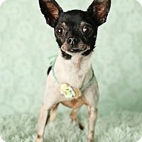 Adopt A Pet :: Suki - Nashville, TN