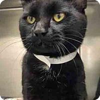 Adopt A Pet :: Dude - Channahon, IL