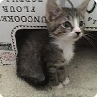 Adopt A Pet :: Gizmo - Mission Viejo, CA