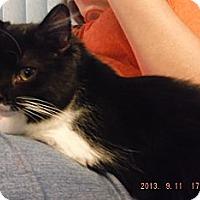 Adopt A Pet :: Marie - Saint Albans, WV