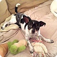 Adopt A Pet :: Biscuit - Marietta, GA