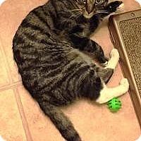 Adopt A Pet :: Danny Boy - Medford, NJ