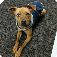 Adopt A Pet :: LUCKY - Sandusky, OH
