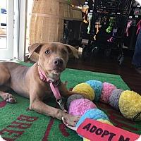 Adopt A Pet :: Alice Caitlin - Jasper, GA