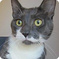 Adopt A Pet :: Alpha - Menomonie, WI