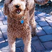 Adopt A Pet :: Bienie - Gilbert, AZ