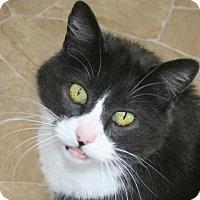 Adopt A Pet :: Alex - Republic, WA