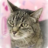 Adopt A Pet :: Shanna - Atascadero, CA