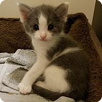 Adopt A Pet :: Meatloaf - Herndon, VA