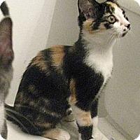Adopt A Pet :: Lovey - Vero Beach, FL