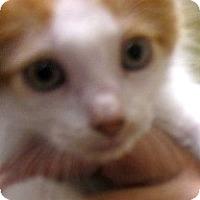 Adopt A Pet :: Bingo - Dallas, TX