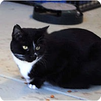 Adopt A Pet :: Belinda - Palmdale, CA