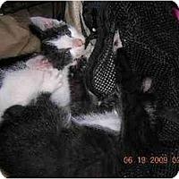 Adopt A Pet :: Gigi - Union, SC
