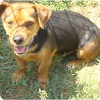 Adopt A Pet :: Yippy - Fowler, CA