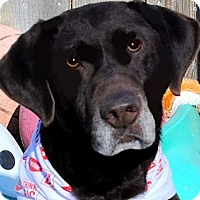 Adopt A Pet :: OAKLEY(WHAT A STORY-PLS READ!! - Wakefield, RI