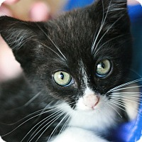 Adopt A Pet :: Reggie - Canoga Park, CA