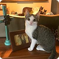 Adopt A Pet :: Imagine - Bentonville, AR