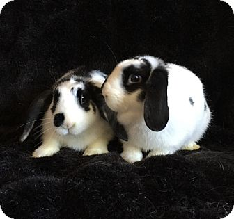 Other/Unknown Mix for adoption in Watauga, Texas - Melody & Lyric