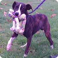 Adopt A Pet :: Bandit - Metamora, IN