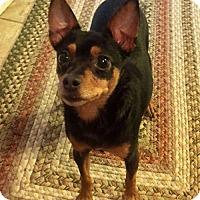 Adopt A Pet :: Kanga - Thomasville, NC