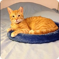Adopt A Pet :: Moxie - Salem, NH