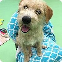 Adopt A Pet :: Dori - Phoenix, AZ