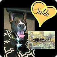 Adopt A Pet :: Sable - Des Moines, IA